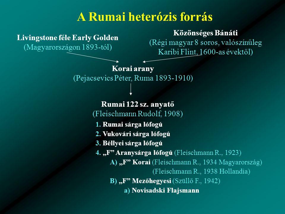 A Rumai heterózis forrás Livingstone féle Early Golden (Magyarországon 1893-tól) Közönséges Bánáti (Régi magyar 8 soros, valószínűleg Karibi Flint, 1600-as évektől) Korai arany (Pejacsevics Péter, Ruma 1893-1910) Rumai 122 sz.