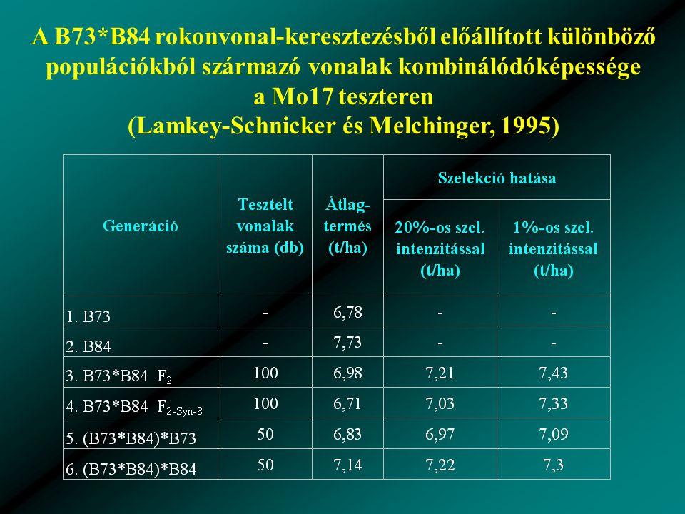 A B73*B84 rokonvonal-keresztezésből előállított különböző populációkból származó vonalak kombinálódóképessége a Mo17 teszteren (Lamkey-Schnicker és Melchinger, 1995)
