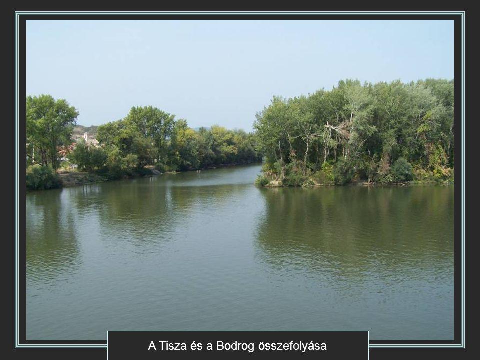 A Tisza és a Bodrog összefolyása