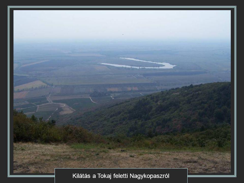 Kilátás a Tokaj feletti Nagykopaszról