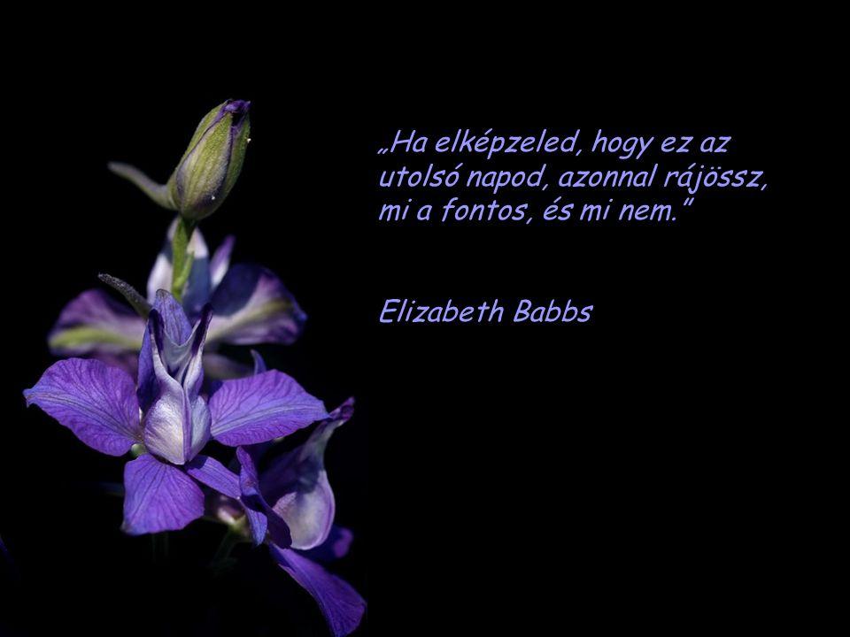 """""""A tekervényes utak nem vezetnek jóra. Honoré de Balzac"""