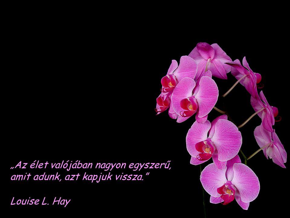"""""""Az élet valójában nagyon egyszerű, amit adunk, azt kapjuk vissza. Louise L. Hay"""