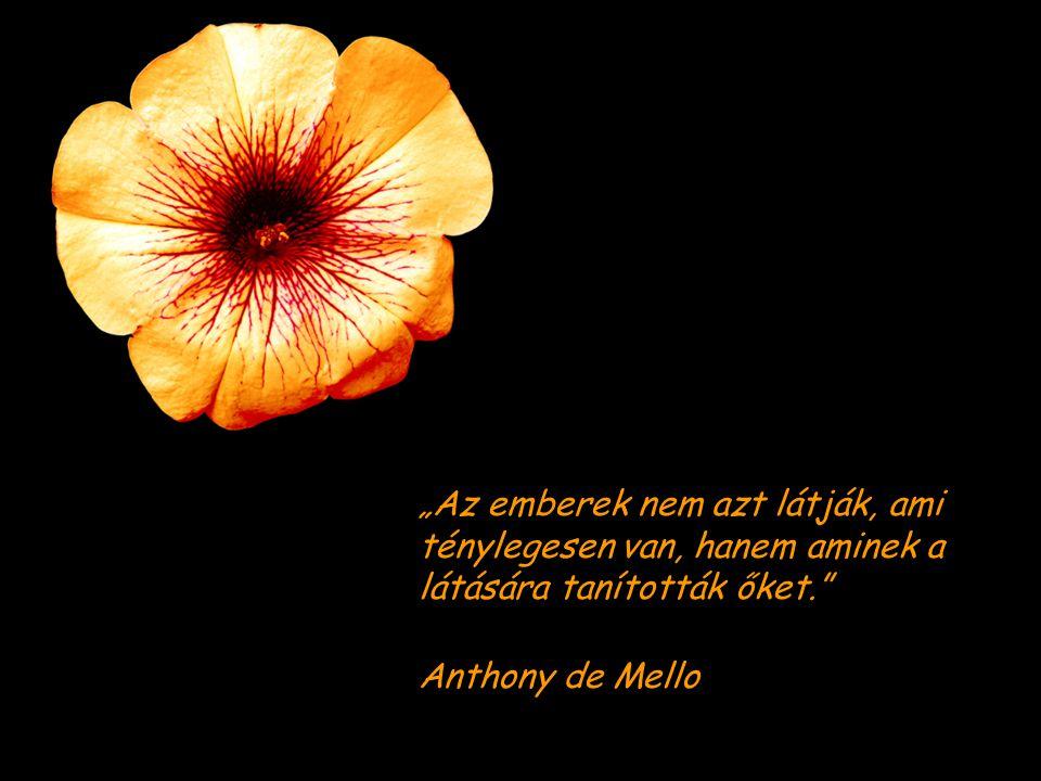 """""""Az emberek nem azt látják, ami ténylegesen van, hanem aminek a látására tanították őket. Anthony de Mello"""