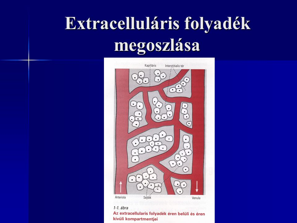 Extracelluláris folyadék megoszlása