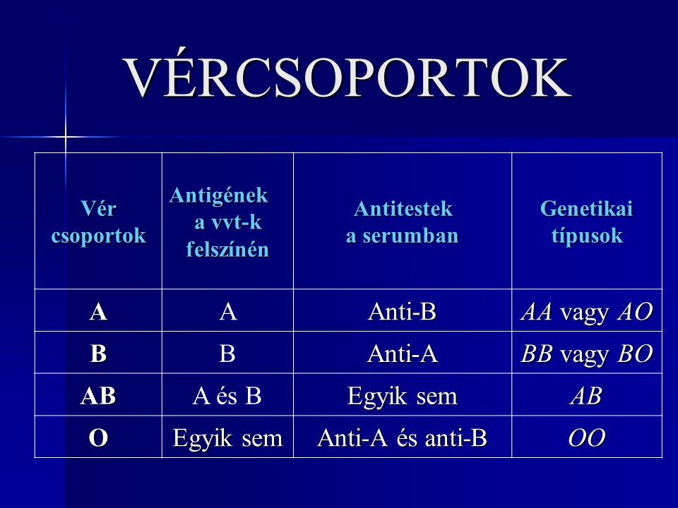 VÉRCSOPORTOK VércsoportokAntigének a vvt-k felszínénAntitestek a serumban Genetikaitípusok AAAnti-B AA vagy AO BBAnti-A BB vagy BO ABA és B Egyik sem AB O Anti-A és anti-B OO