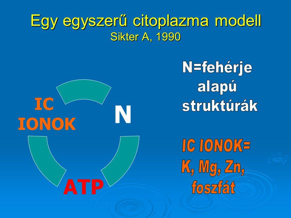 Egy egyszerű citoplazma modell Sikter A, 1990