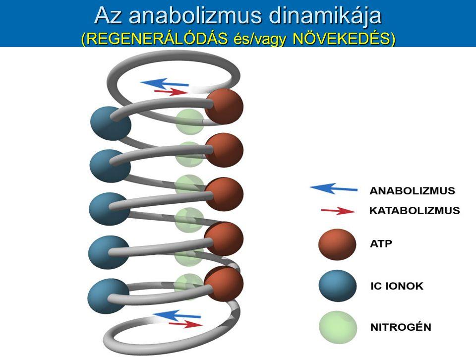 Anabolikus/katabolikus ionok [K+] x [Mg++] x [HPO4--+2PO4-]x [Zn++] --------------------------------------------------------- = k1x[N] [Ca++] x [Na+] x [Cl-] x [H+] x [Cu++] [K+] x [Mg++] x [HPO4--+2PO4-]x [Zn++] ------------------------------------------------------- = k2x[ATP] [Ca++] x [Na+] x [Cl-] x [H+] x [Cu++]