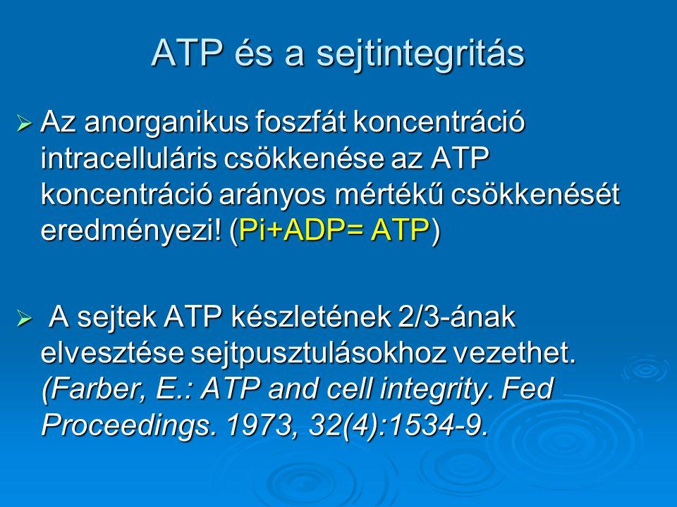 ATP és a sejtintegritás  Az anorganikus foszfát koncentráció intracelluláris csökkenése az ATP koncentráció arányos mértékű csökkenését eredményezi!