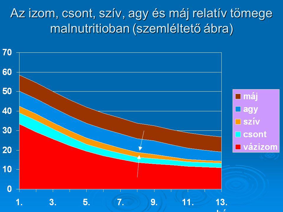 Az izom, csont, szív, agy és máj relatív tömege malnutritioban (szemléltető ábra)