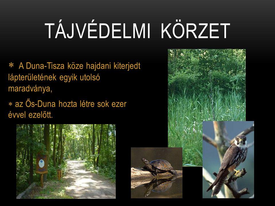  A Duna-Tisza köze hajdani kiterjedt lápterületének egyik utolsó maradványa,  az Ős-Duna hozta létre sok ezer évvel ezelőtt. TÁJVÉDELMI KÖRZET