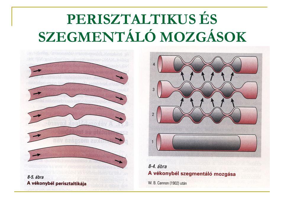 PERISZTALTIKUS ÉS SZEGMENTÁLÓ MOZGÁSOK