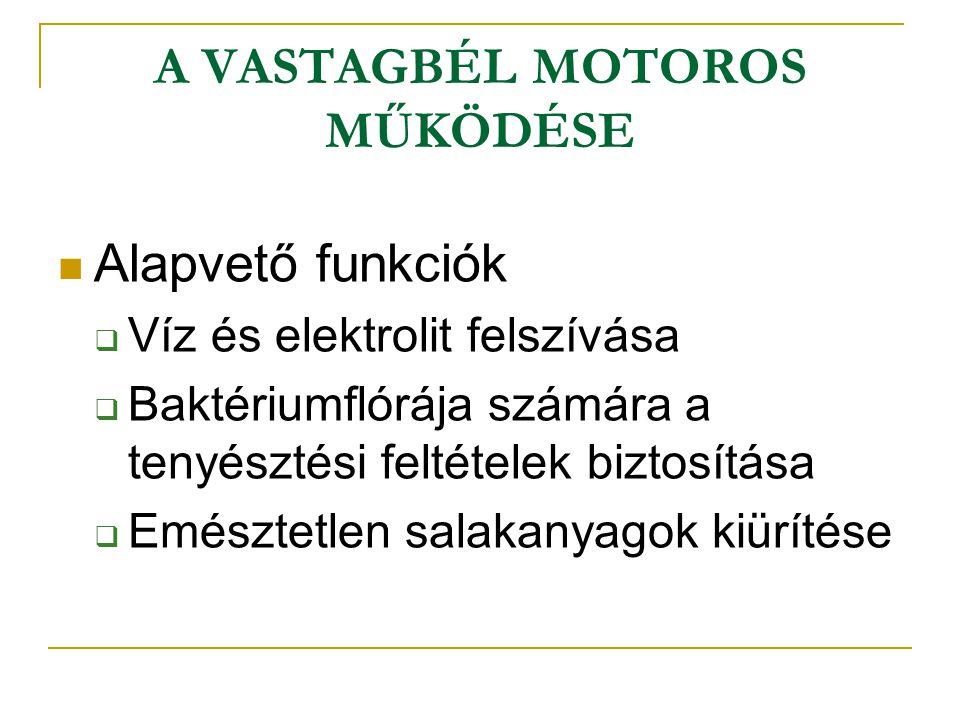 A VASTAGBÉL MOTOROS MŰKÖDÉSE Alapvető funkciók  Víz és elektrolit felszívása  Baktériumflórája számára a tenyésztési feltételek biztosítása  Emésztetlen salakanyagok kiürítése
