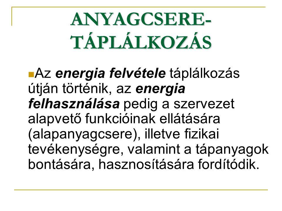 ANYAGCSERE- TÁPLÁLKOZÁS Az energia felvétele táplálkozás útján történik, az energia felhasználása pedig a szervezet alapvető funkcióinak ellátására (a