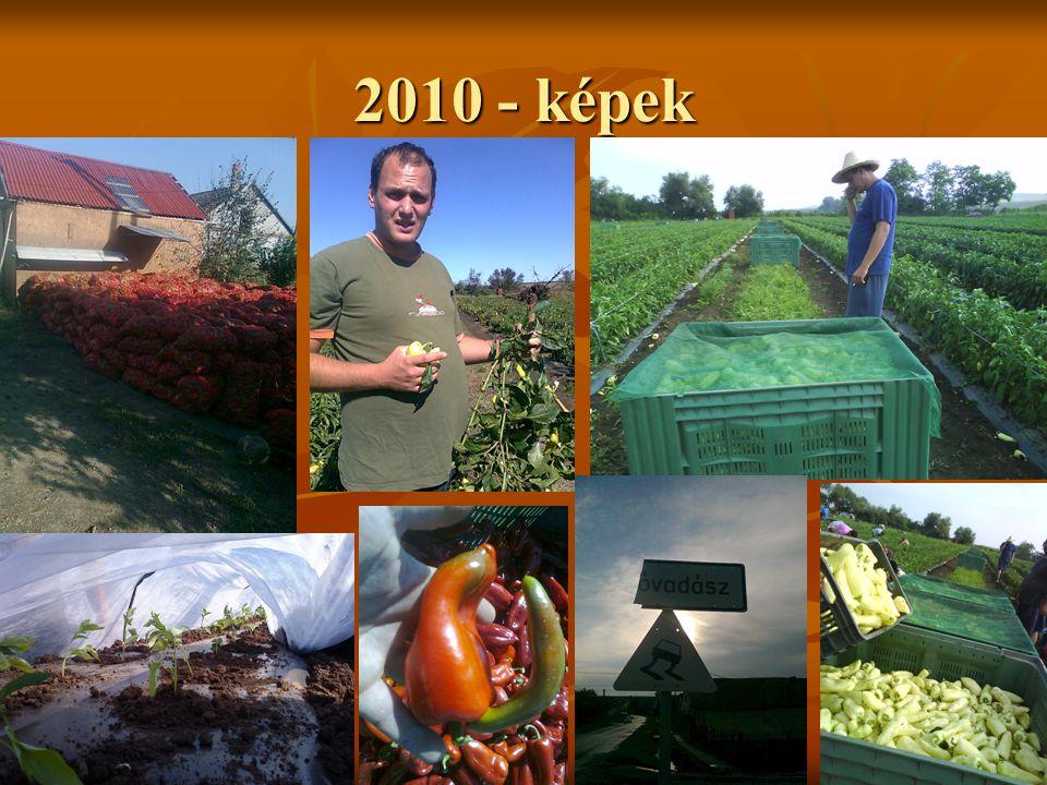 2010 - képek