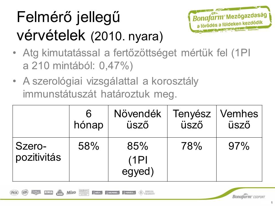 Felmérő jellegű vérvételek (2010. nyara) 6 hónap Növendék üsző Tenyész üsző Vemhes üsző Szero- pozitivitás 58%85% (1PI egyed) 78%97% Atg kimutatással