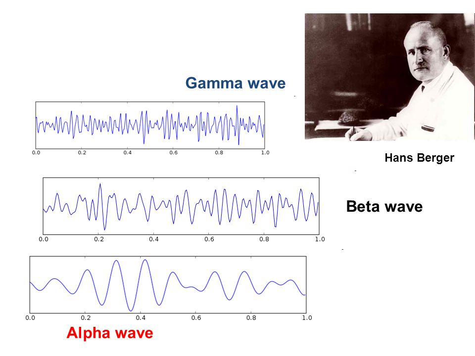Alpha wave Hans Berger Gamma wave Beta wave