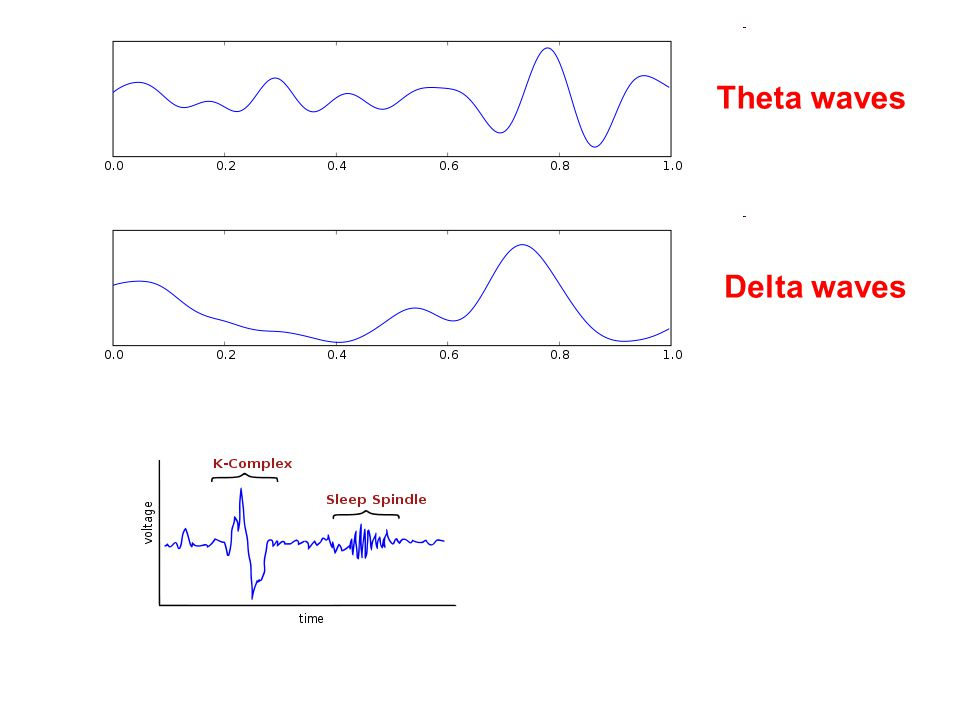 Delta waves Theta waves