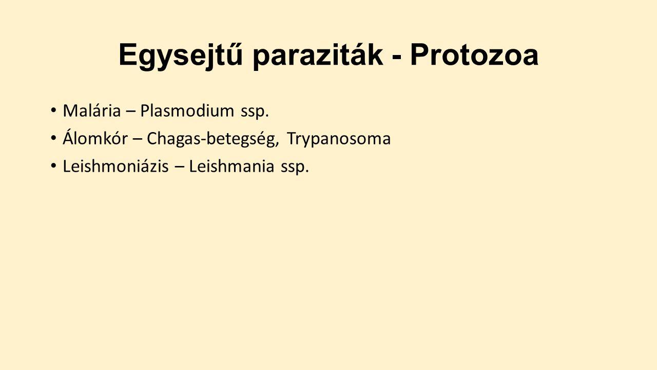 melyek a felsorolt protozoák közül paraziták)