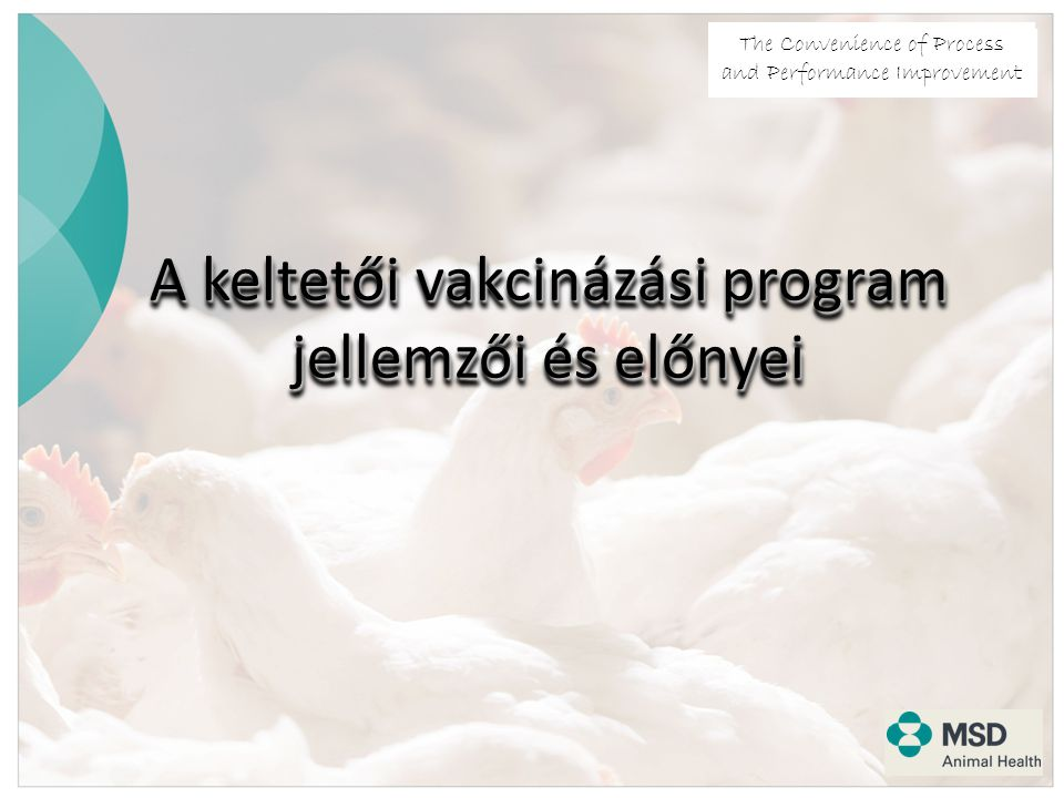 The Convenience of Process and Performance Improvement A keltetői vakcinázási program jellemzői és előnyei