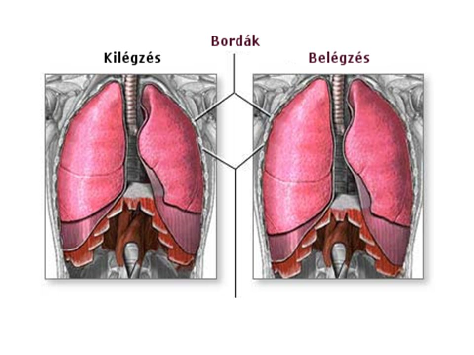 A légzés válaszokat okoz