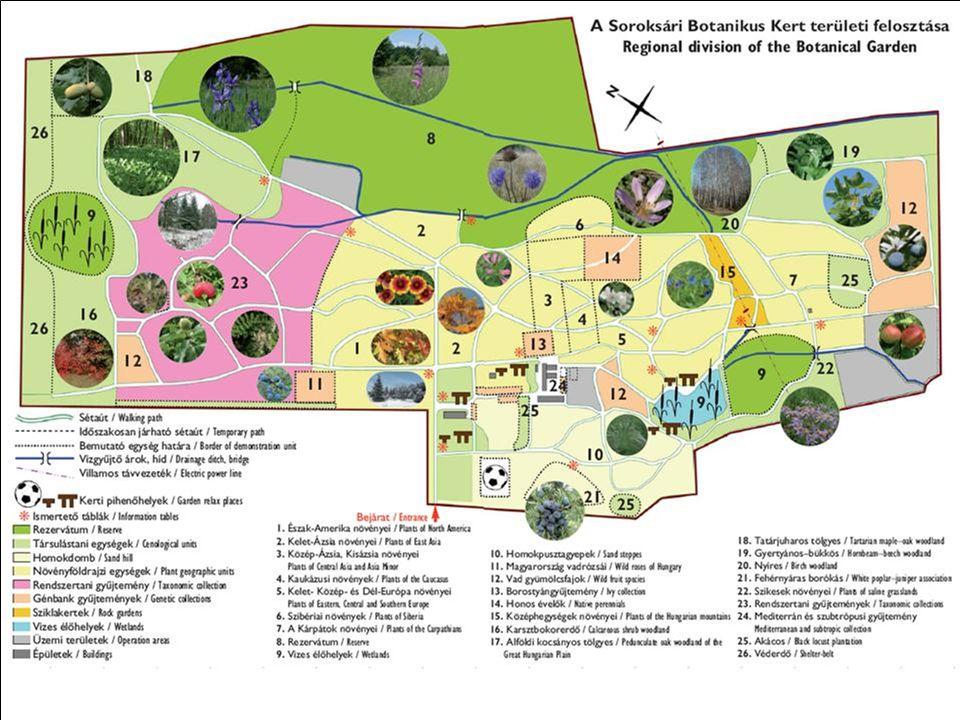 soroksári botanikus kert térkép Soroksári Botanikus Kert élőnövény gyűjteménye   ppt letölteni